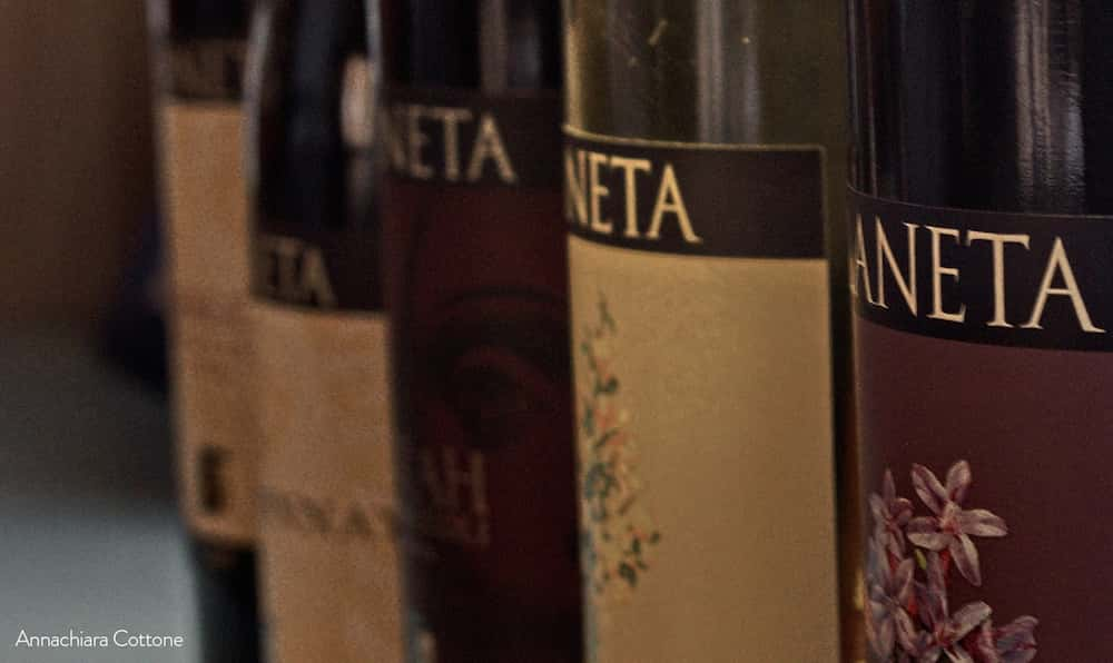 Tasting of Planeta Oil and Wines - Menfi-image-8