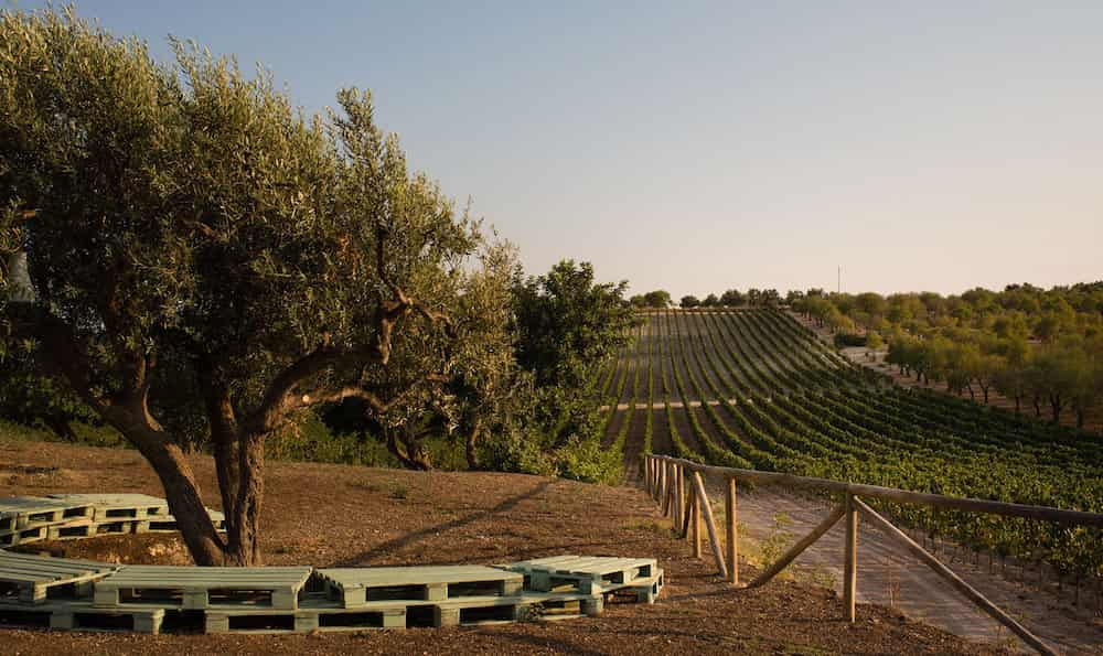 Planeta Wine and Oil Tastings – Noto Syracuse-image-8