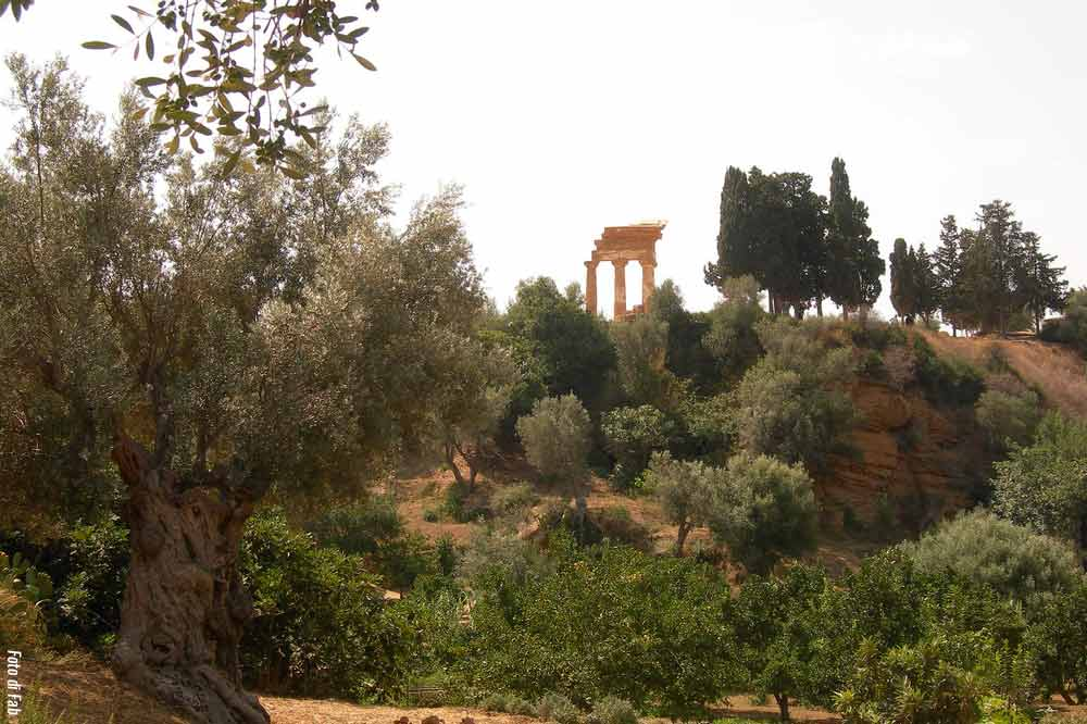 Guided tour along the Valley of the Temples and the Archeological Museum in Agrigento-image-9