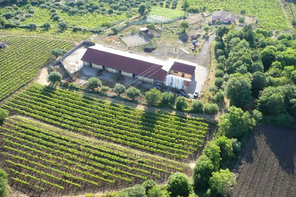 Visit to a cheese factory on Etna, wine and cheese tasting on a holiday farm-image-5
