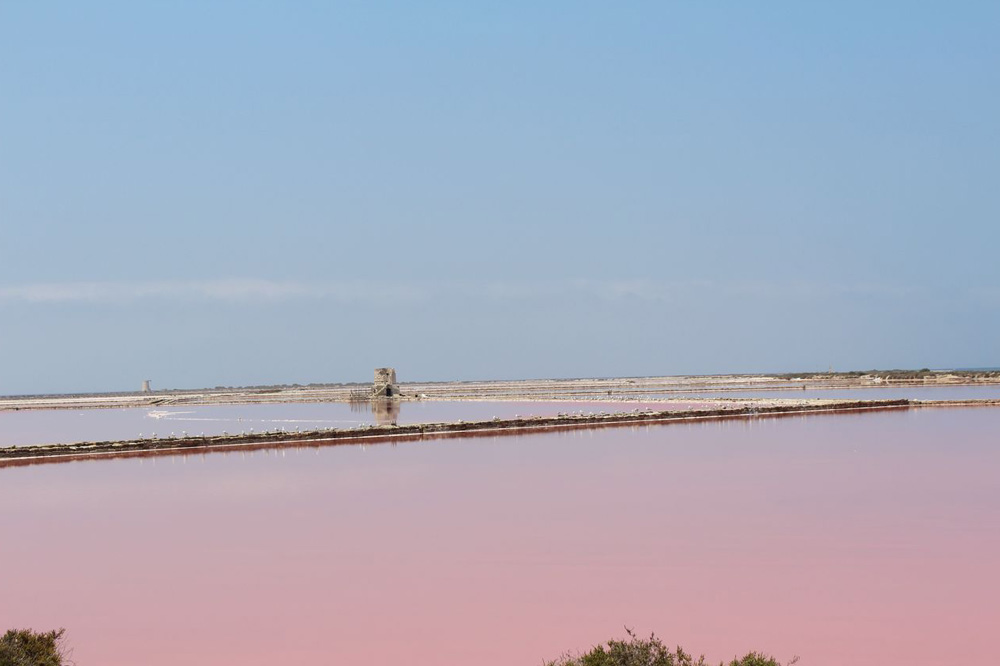 Nature, safari and trekking at the Marsala Saltpans-image-8
